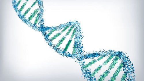 сохранить в ДНК код
